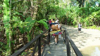 Sendero - Parque Tayrona